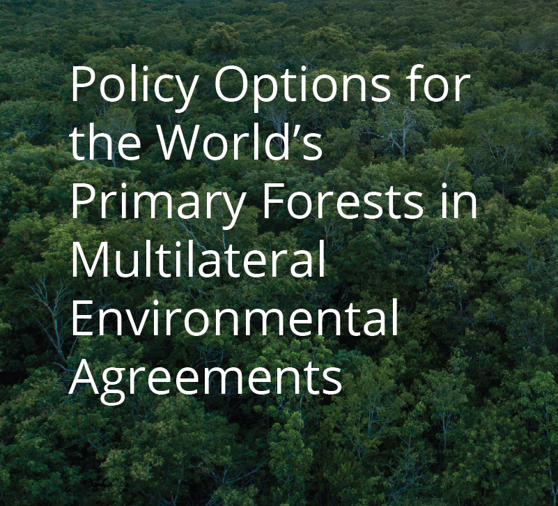 Primary Forests - Definition Status and Future Prospects for Global Conservation