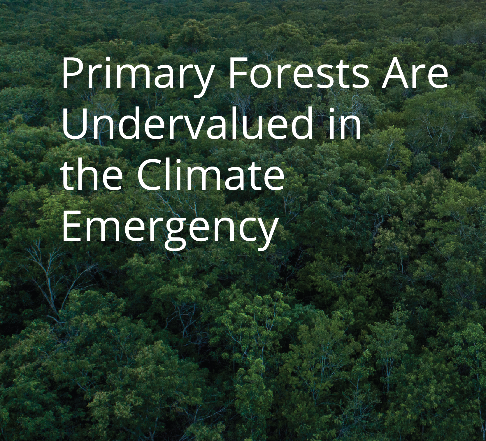 Primary Forests Are Undervalued in the Climate Emergency