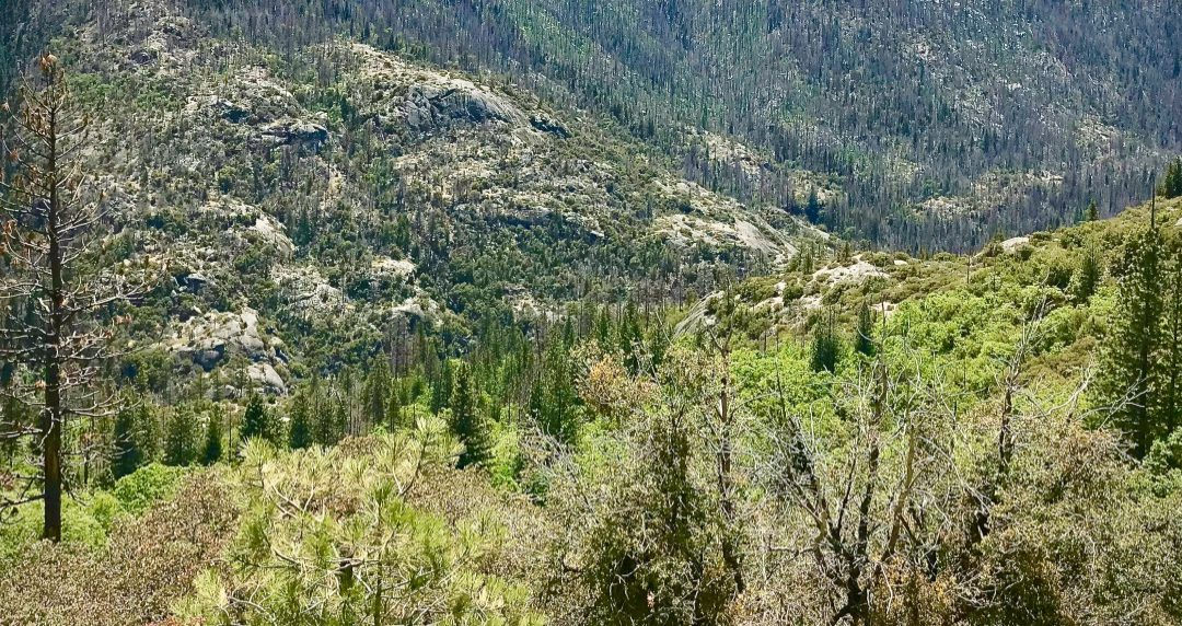 Chief Scientist Dr. Dominick DellaSala speaks on primary forests and wildfire ecology