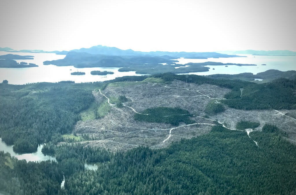 Tongass rainforest on the Trump administration's chopping block