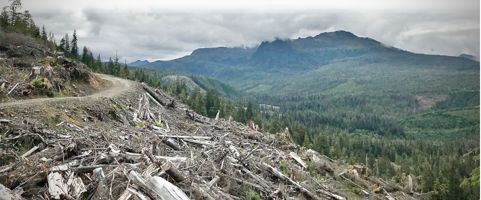 Clearcut logging on the Tongass rainforest in Alaska-D. DellaSala