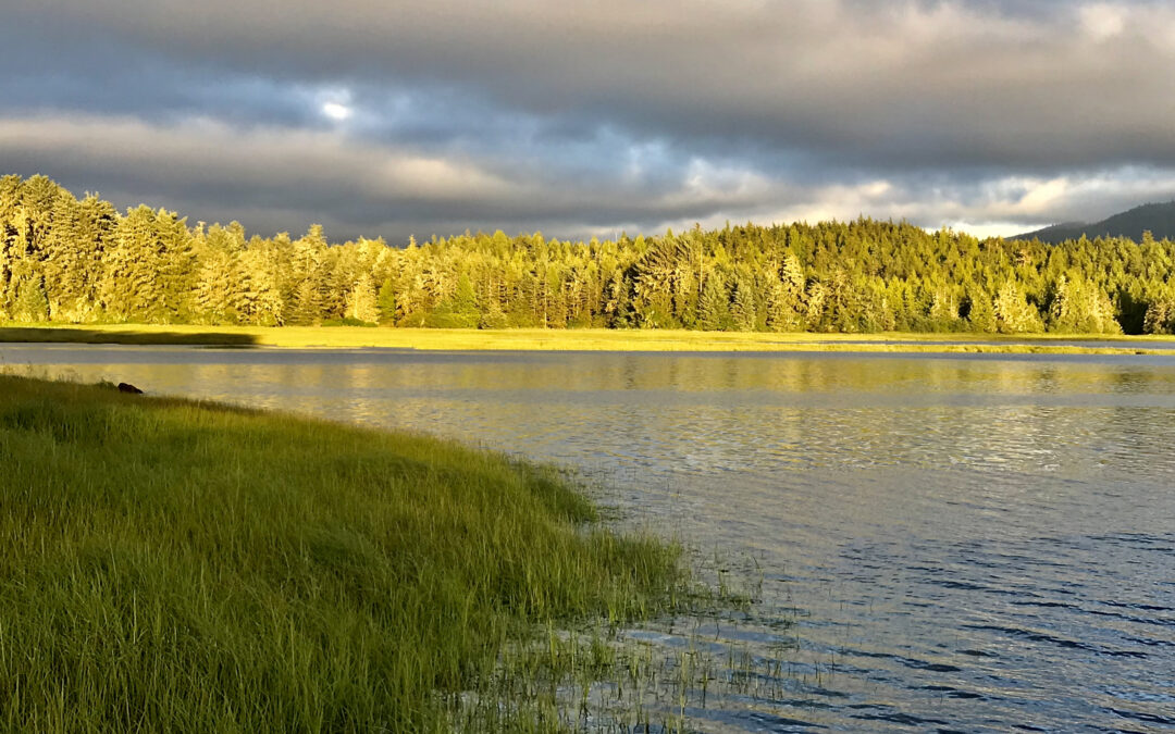 Major Victory in the Tongass Rainforest in Alaska!